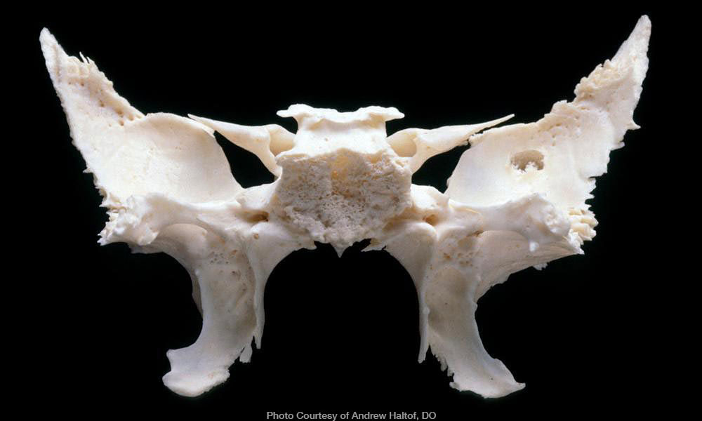 Sutherland Cranial Teaching Foundation: Osteopathic Photography: Andrew Haltof, DO